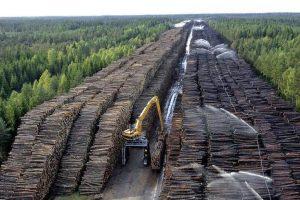 Čína je největším odběratelem ruského dřeva ze Sibiře. Zdroj: China National News