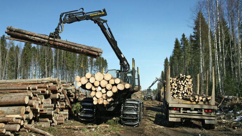 Odlesňování Sibiře probíhá již řadu let, přičemž většina dřeva míří do sousední Číny, často jen za zlomek skutečné ceny. droj: jamestown.org/RT